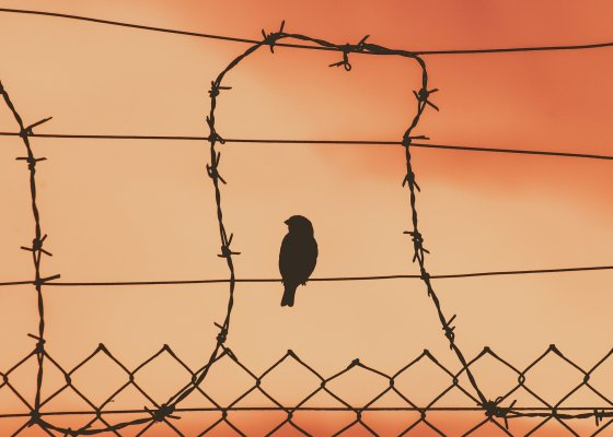 A sparrow is sitting on a metal fence, surrounded by a loop of barbed wire. only the silhouette of the bird is visible. The sky behind it is red, perhaps because of a sandstorm or a sun set.